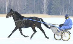 2017-02-17 Fröken Hallanda/ Foto Arvikafotografen/Bengt Andersson