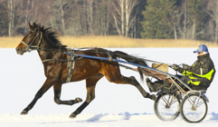 2017-02-17 Great Winner / Foto Arvikafotografen/Bengt Andersson