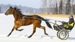 2017-01-17 Mellby Green/ Foto Arvikafotografen/Bengt Andersson