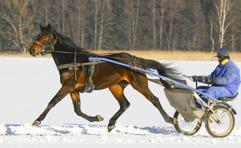 2017-02-14 Piraya Roc / Foto Arvikafotografen Bengt Andersson