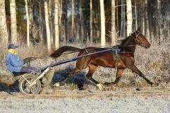 20181126 Ronja Boko/Foto Arvikafotografen Bengt Andersson