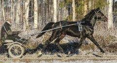 20181126 Mack Joe/ Foto Bengt Andersson/Arvikafotografen