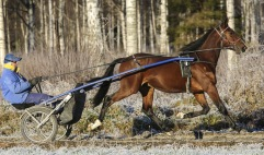 20181126 Born Winner/Foto Arvikafotografen Bengt Andersso