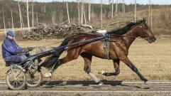 20190328 Born Winner/Foto Arvikafotografen Bengt Andersso