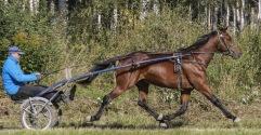 2019-09-16 Dragon Gate/ FOTO Bengt Andersson Arvikafotografen