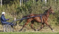 2019-09-18 Pacha Barosso/ FOTO Bengt Andersson Arvikafotografen