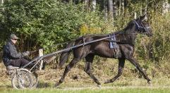 2019-09-16 Mellby Jambalaya / FOTO Bengt Andersson Arvikafotografen