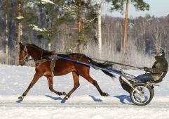 2021-01-16 Jula Sannantina Foto Bengt Andersson/Arvikafotografen