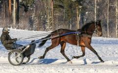 2021-01-16 Coco Foto Bengt Andersson/Arvikafotografen
