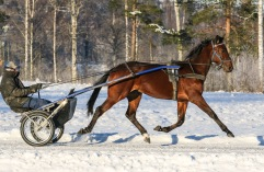 2021-01-16 Kluster Foto Bengt Andersson/Arvikafotografen