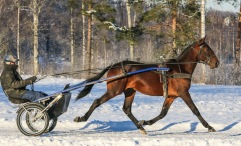 2021-01-16 Sugarbowl Foto Bengt Andersson/Arvikafotografen