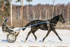 20210205 Lord Albert Foto Bengt Andersson/Arvikafotografen