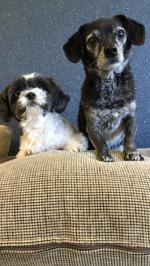 Leia & Frankie - Maskotar