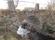 10 Bollebygd Slätthult C.a 3,7km NV Hedareds stavkyrka