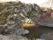 10B Uddevalla Grohed C.a 1,6km SSO Lerbomotet