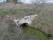 42A Mörbylånga Mellby C.a 2,96km N Segerstads kyrka bro 4