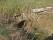 43A Mörbylånga Mellby C.a 3km N Segerstads kyrka bro 5