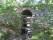 07B Munkedal Portarna C.a 3,5km  SO Munkedals kyrka _Gamla Riks 2an)