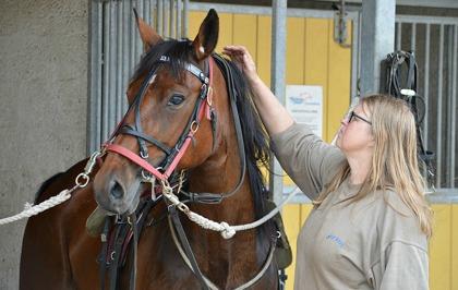 Välmående hästar