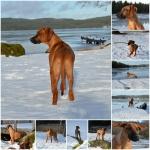 PicMonkey Collage22