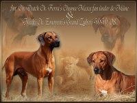 mexx-pups