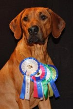 Vilho%20Juniorchampion%20(Small)