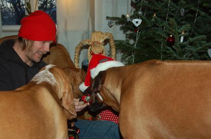 Julklappsutdelning-man undrar vem som tycker att det är roligast. Tobias eller hundarna:)