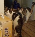 Två kattbröder från det alla första projektet