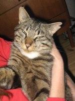 Underbara katten Nisse
