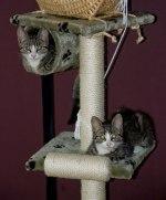 Felix & Findus i sitt nya hem