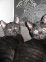 Merlin & Melvin