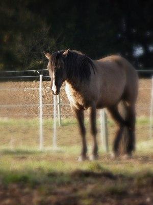 En häst med Smärta