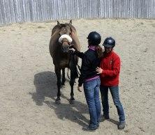Hästar är Synkroniserande djur - och reagerar på andras Energier!