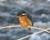 2016-01-22 kungsfiskare 634 (3)