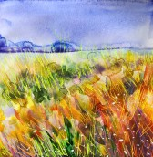 Warm field: 30x30 cm, watercolor on paper, framed in 50x50 cm white frame, price upon request