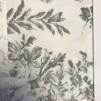 Everdeen - Evergreen grey