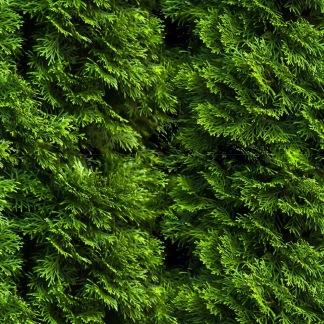 Kaskad av skogsgrönt