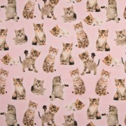 Rosa med söta katter