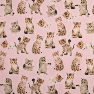 Rosa med söta katter - Rosa katter