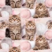 Katter med nystan