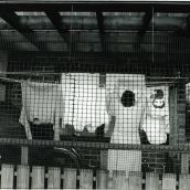Dagmamma på Braxengatan hänger tvätt Fiksätra