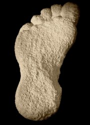 Dr Oudot's plaster cast of the curious footprint. 1950.