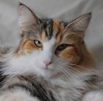 mamma S*Kronängens Amaryllis, f 09 24