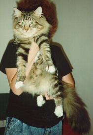 Solhuset's Sylvester, född 1989