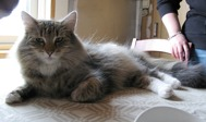 GIC S*Kiss-Curl's Ylva, född 2006