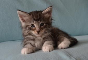 Kitty Pryde 6 weeks old