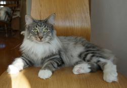 CH S*Kronängens Kitty Pryde