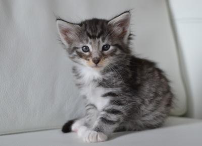 Kitty Pryde 5 veckor