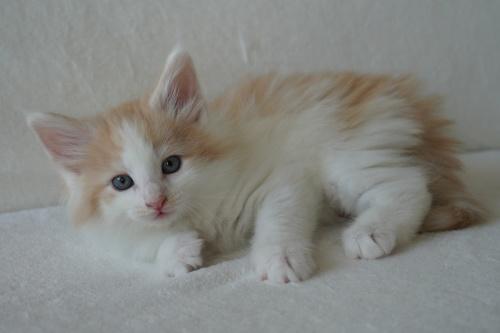 6 weeks old