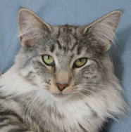 mamma S*Kronängens Kitty Pryde, ns 09 24